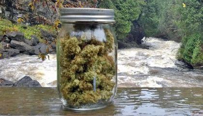 Argumentaire en faveur d'une vraie légalisation