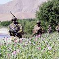 Soldats de l'OTAN dans un champ de pavot