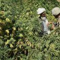 Négociations entre un soldat et un cultivateur afghan