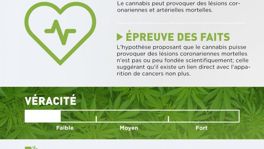 Le cannabis ne cause pas de dommages mortels au coeur
