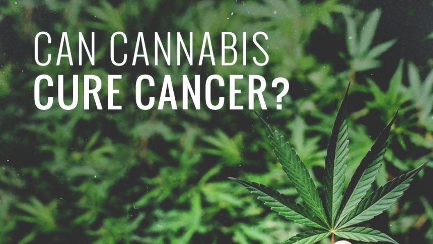 Guérir du cancer grâce au cannabis ?