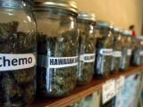Les variétés de cannabis : du jargon à la science